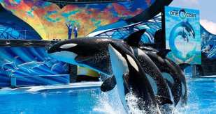 SeaWorld® Orlando is located only 1.5 miles from Hilton Orlando! Guests can enjoy Complimentary shuttle service to SeaWorld® Orlando. *© 2013 SeaWorld Parks & Entertainment, Inc. All rights reserved.